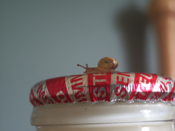 Baby Snail on a Pint of Milk. Submitted by Ross Kendall on Sat,